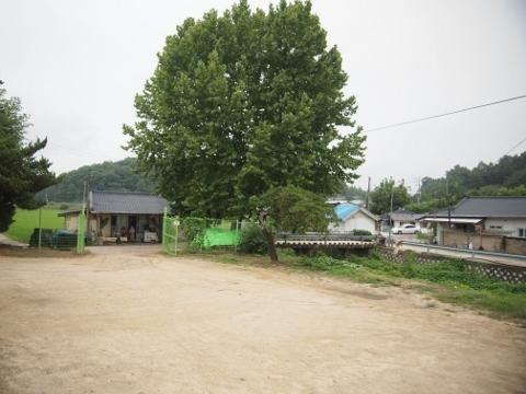 〔韓国〕慶北線 開浦